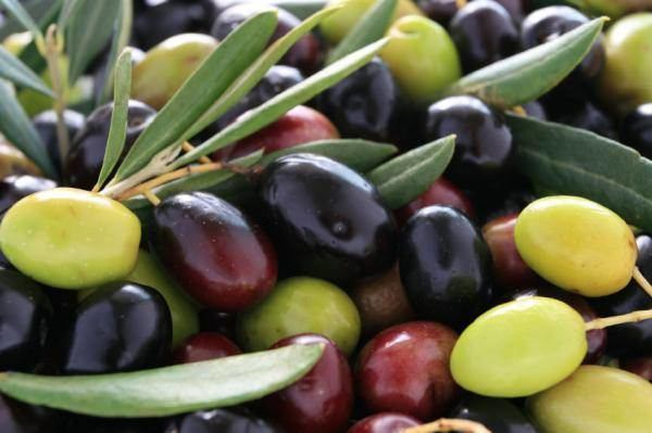 Zeytin çekirdeği yemenin faydaları