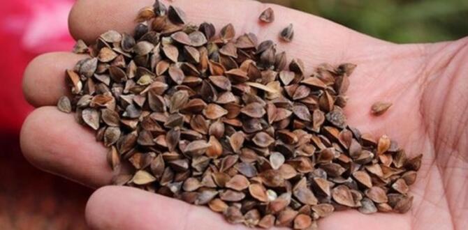 İngiliz Arkeoloji Araştırma Enstitüsü'nde tutulan ata tohumlarına Türkiye el koydu